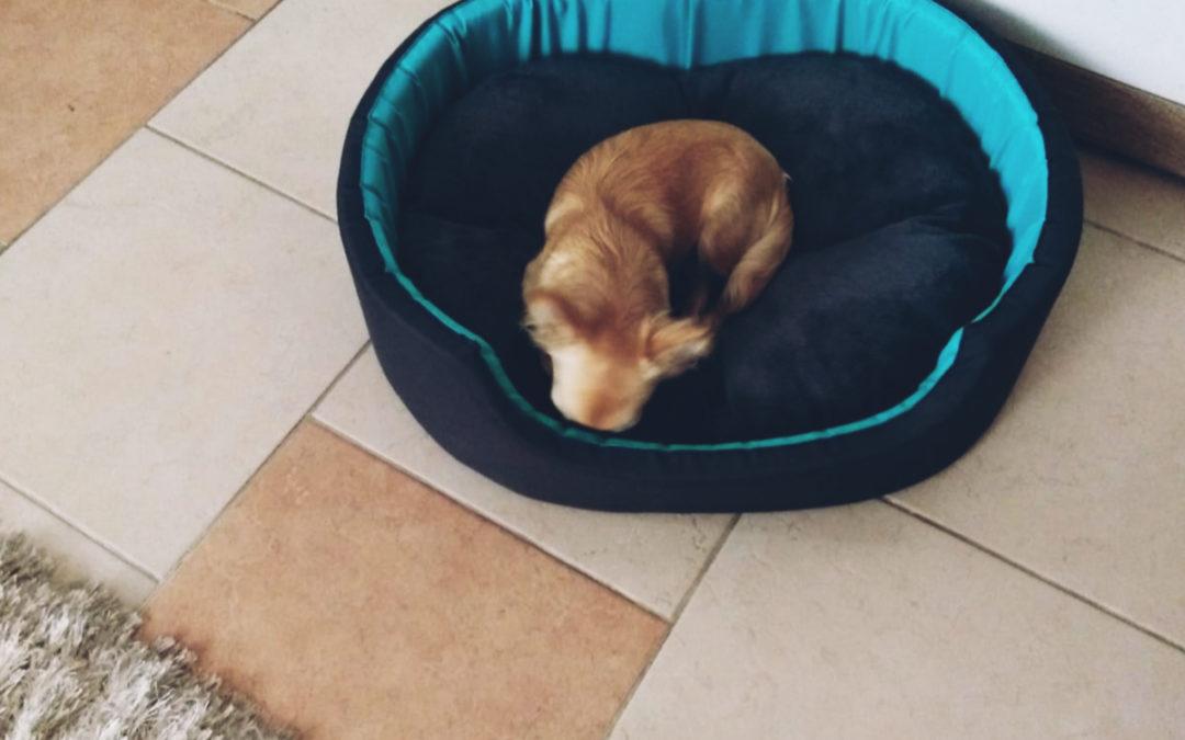 Wyprawka dla psa – co powinniśmy mieć na początek
