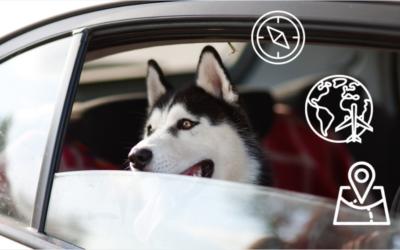 Co zrobić z psem podczas wakacji?
