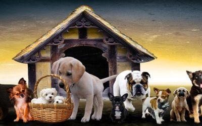Jak wybrać dobrą hodowlę psów?