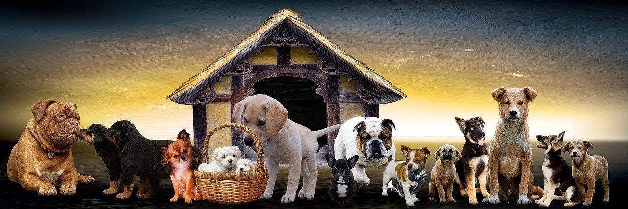 jak wybrać dobrą hodowlę psów
