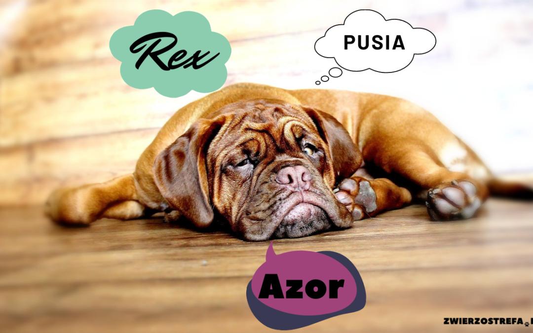 Imiona dla psów i kotów – mniej oczywiste inspiracje