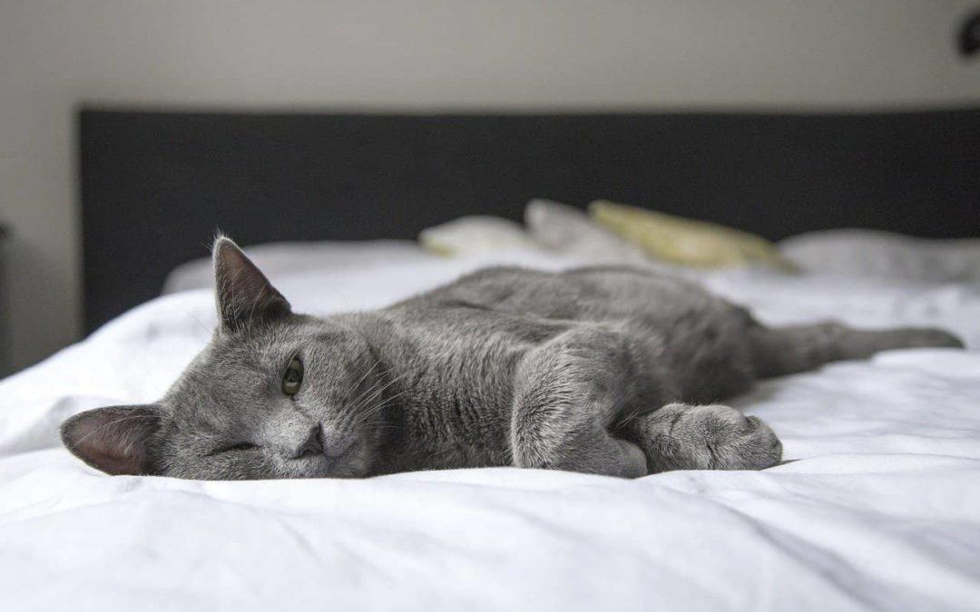 Jak się przygotować na pojawienie się kota w domu