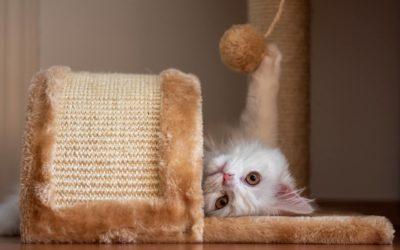 Najlepsze zabawki dla kota, czyli zajęty kot to szczęśliwy kot