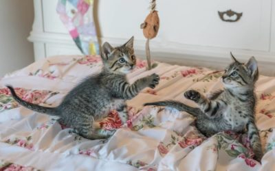 Jak bawić się z kotem? Jak zająć kotu czas?