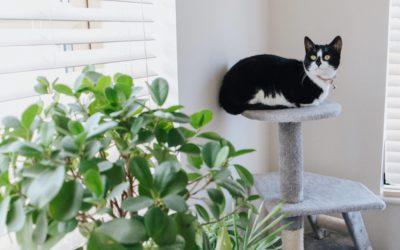 Wyprawka dla kota, czyli podstawowe wyposażenie dla kota