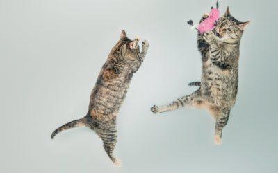 Tresura kota – czy kota można nauczyć komend i sztuczek?