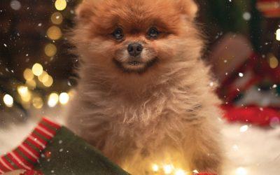 TOP 10 prezentów pod choinkę dla psa