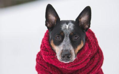 Spacery z psem zimą – zadbaj o jego bezpieczeństwo