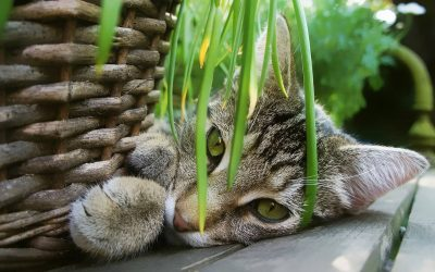 Domowe rośliny trujące dla kotów