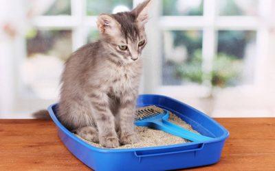 Jaki żwirek dla kota wybrać? [Wszystko, co musisz wiedzieć o żwirku]