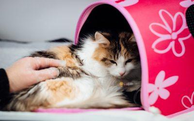 Szczepienie kota – kiedy szczepi się kota i na jakie choroby