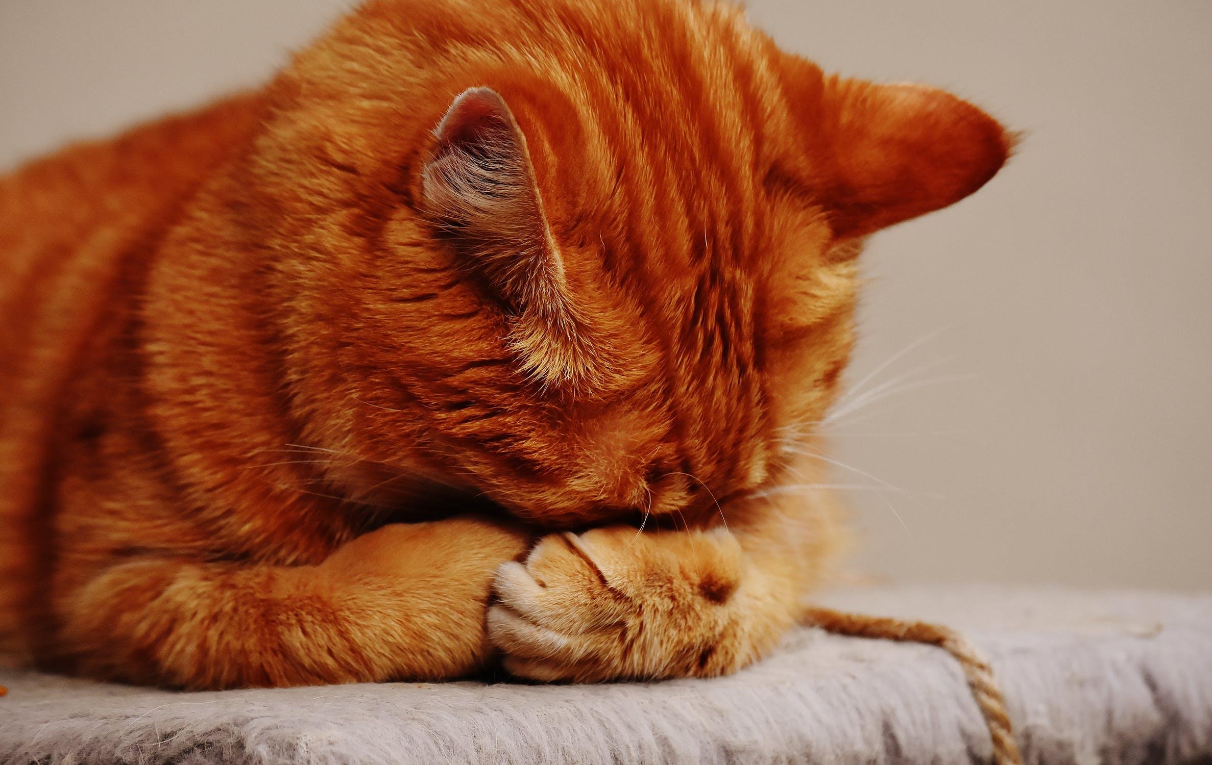 Ile żyją koty